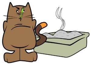 Come educare un gatto